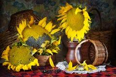 古典静物画用大向日葵和柳条筐 免版税库存照片