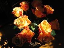 古国玫瑰 免版税图库摄影