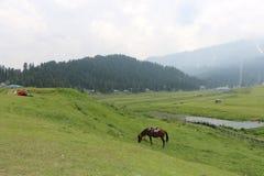 古尔马尔格美丽的景色  库存图片