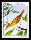 古巴捕虫鸣鸟捕虫鸣鸟gundlachii,土产鸟serie,大约1975年 免版税图库摄影