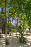 古巴的丰富的绿色异乎寻常的热带植被 库存图片