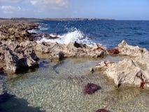 古巴的珊瑚岸 免版税库存图片