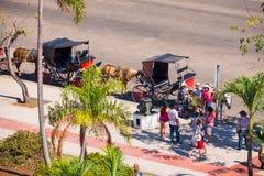 古巴,哈瓦那- 2017年5月5日:在鞔具的马在城市街道上 复制文本的空间 库存图片