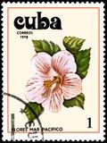 古巴-大约1978年:邮票,打印在古巴,显示一朵木槿花 免版税库存照片