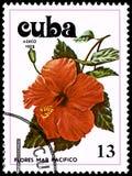 古巴-大约1978年:邮票,打印在古巴,显示一朵木槿花 免版税库存图片