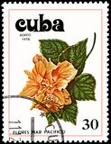 古巴-大约1978年:邮票,打印在古巴,显示一朵木槿花 库存图片