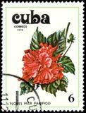 古巴-大约1978年:邮票,打印在古巴,显示一朵木槿花 免版税图库摄影