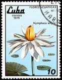 古巴-大约1979年:邮票,打印在古巴,显示星莲属ampla,系列荷花 免版税库存照片