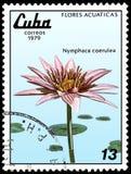 古巴-大约1979年:邮票,打印在古巴,显示星莲属caerulea,系列荷花 免版税图库摄影