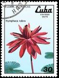 古巴-大约1979年:邮票,打印在古巴,显示星莲属rubra,系列荷花 库存图片