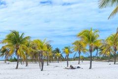 古巴- 2018年1月07日:晒日光浴在棕榈树下的游人  库存图片