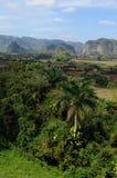 古巴` s tabacco农业风景Vinales在Pinar del里约 库存图片