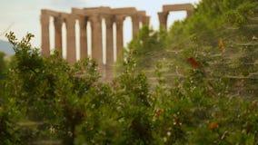 古希腊寺庙看法通过与蜘蛛网的绿色灌木依然是 股票视频