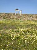 古希腊寺庙遗骸在野花领域,提洛岛海岛考古学站点的  库存照片