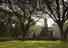 古庙和大树在Sukhothai历史公园, T 免版税库存图片