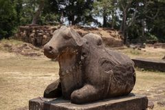 古庙在吴哥窟复合体,柬埔寨的石头纪念碑 楠迪母牛或公牛雕象 印度寺庙雕塑 免版税库存图片