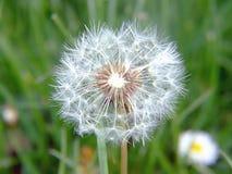 古怪草的草甸 免版税库存图片