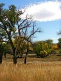 古怪被烧的云彩的结构树 免版税图库摄影