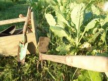 古板的园艺工具 库存图片