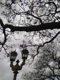 古板的街灯和开花的兰花楹属植物树 库存照片