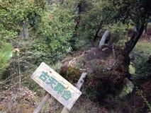 古老与汉语的神圣坟场 库存图片