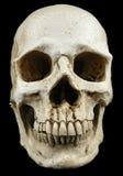 古老人的头骨复制品 库存照片