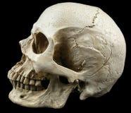 古老人的头骨复制品 免版税库存照片