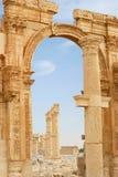 古老列扇叶树头榈叙利亚 免版税图库摄影