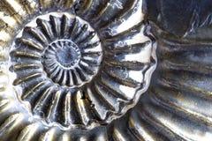 古老化石 免版税库存照片