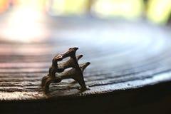 古老古铜色鼓表面上的三只青蛙  青蛙鼓或雨 库存照片