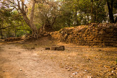 古老墙壁和树在吴哥城 免版税库存图片