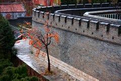 古老墙壁用冰冷的苹果 免版税库存图片
