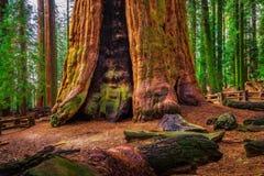古老将军谢尔曼Tree在美洲杉国家公园 免版税库存图片