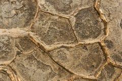 古老岩石Moeraki纹理 免版税库存图片