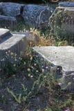 古老废墟和野生植物 库存照片