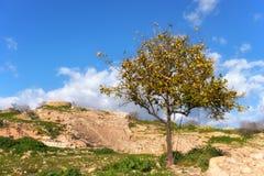 古老废墟在嘉藤帕福斯考古学公园在塞浦路斯 图库摄影