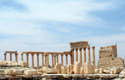 古老扇叶树头榈叙利亚 免版税图库摄影