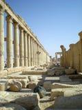 古老扇叶树头榈罗马叙利亚时间城镇 免版税图库摄影