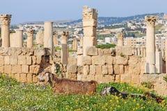 古老杰拉什,希腊罗马市的废墟Gerasa在现代约旦 库存照片