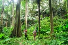 古老森林,雨林 免版税库存照片