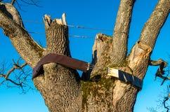 古老橡树 免版税库存图片