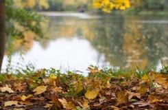 古老湖在公园 免版税库存图片