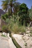 古老灌溉在阿曼 图库摄影