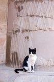古老猫埃及人寺庙 库存图片