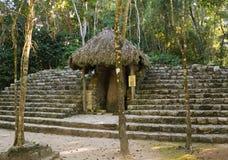 古老玛雅寺庙在森林,墨西哥里丢失了 免版税图库摄影