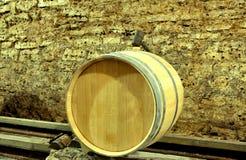 古老瓶酒在古老地窖里 独特vi 免版税图库摄影