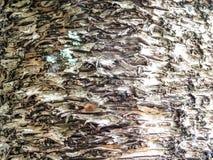 古老皮肤木地球口气水平线 库存图片