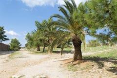 古老石堡垒的片段有树的和在墙壁上的一棵棕榈树在老城市 免版税图库摄影