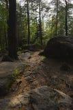 古老石头的看法在绿色森林里 免版税图库摄影