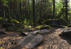 古老石头的看法在绿色森林里 图库摄影